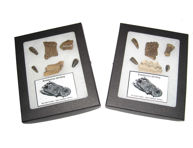 Hell Creek Fossils II